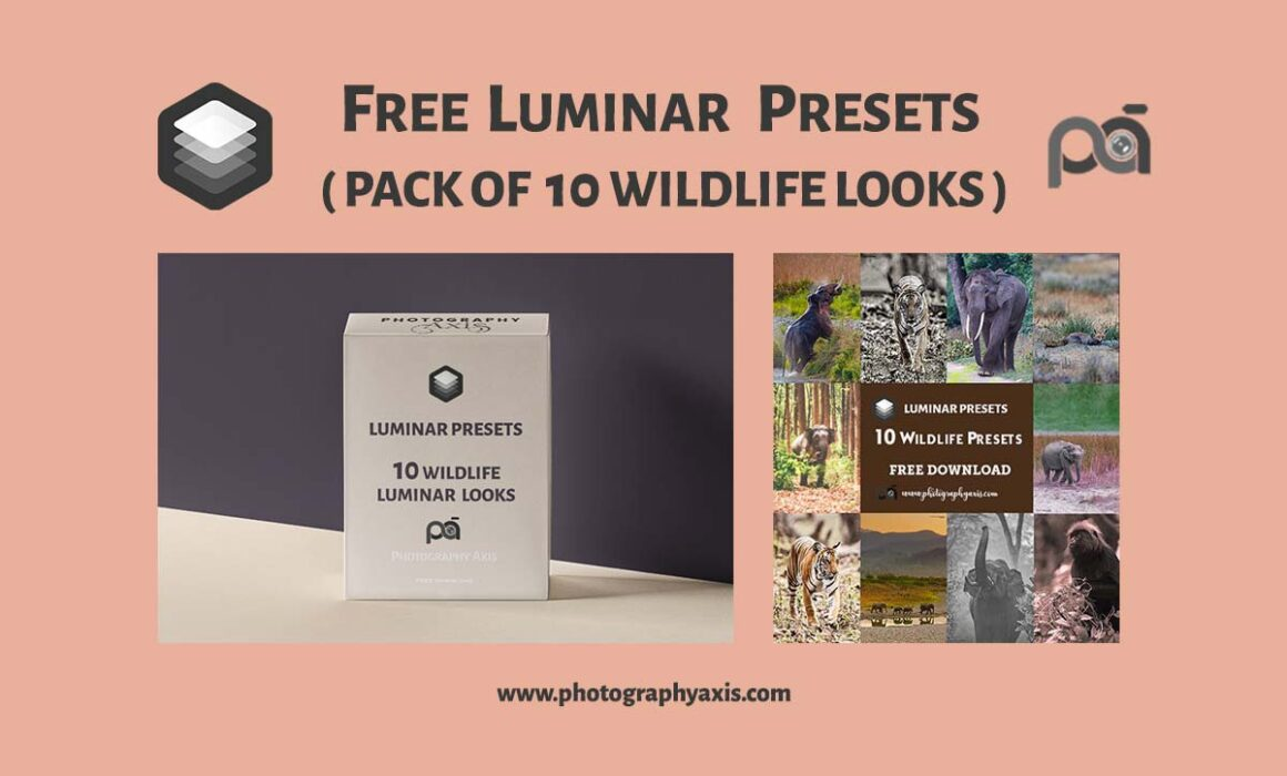 Free Luminar Presets-Wildlife Looks