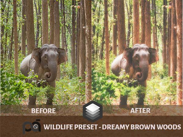 Luminar Preset -Dreamy Wild Woods