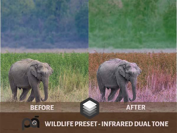 Luminar Preset-Infrared Dual Tone