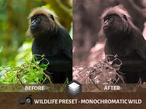 Luminar Preset Monochromatic Wild
