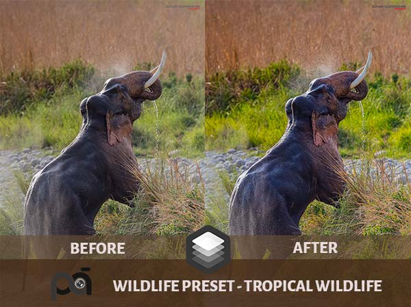 Luminar Preset-Tropical Wildlife