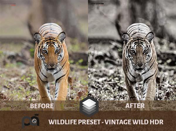 Luminar Preset Vintage Wild HDR