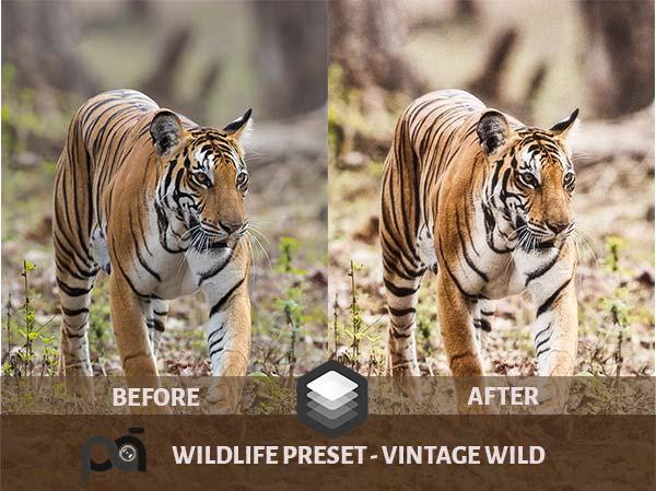 Luminar Preset- Wildlife Preset Vintage Wild