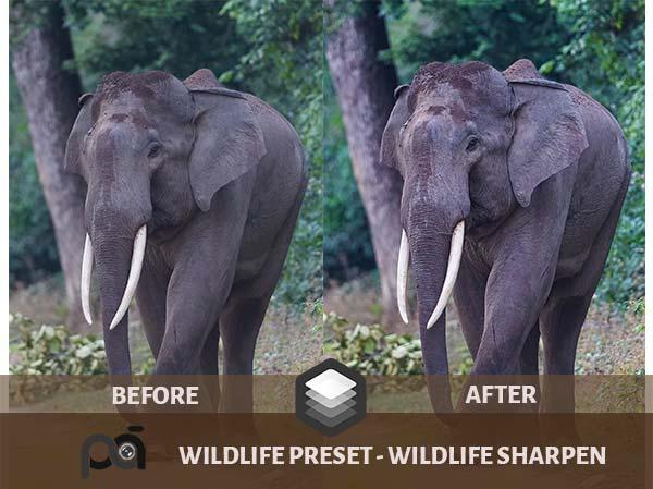 Luminar Preset Wildlife Sharpen