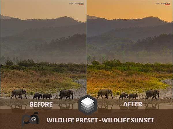 Luminar Preset-Wildlife Sunset