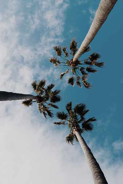 Nature photo with three trees