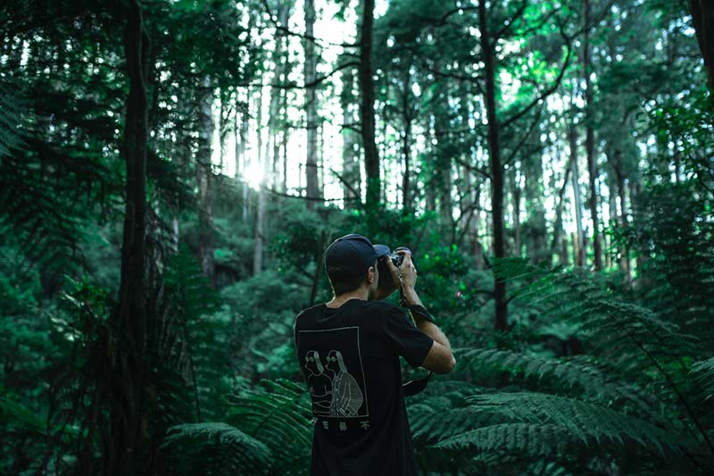 Photographer doing forest photography