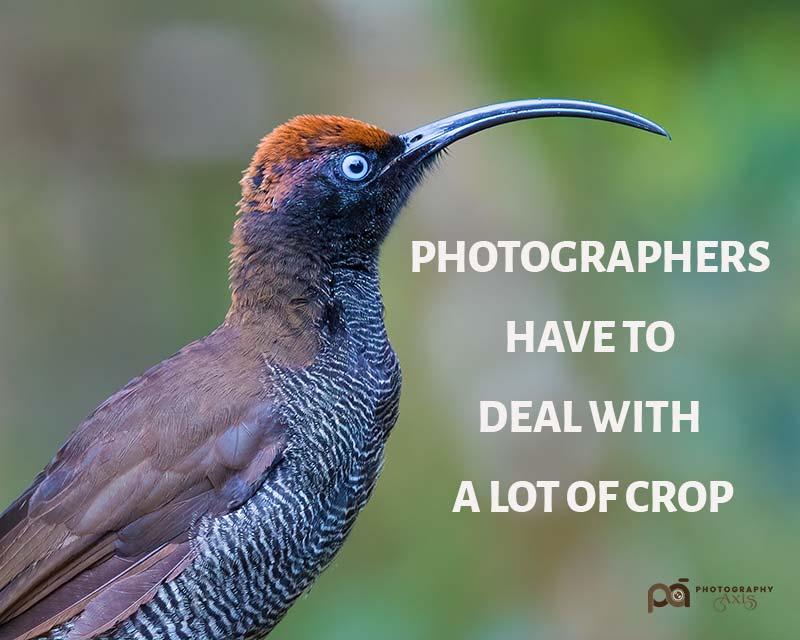 Photography Pun 7