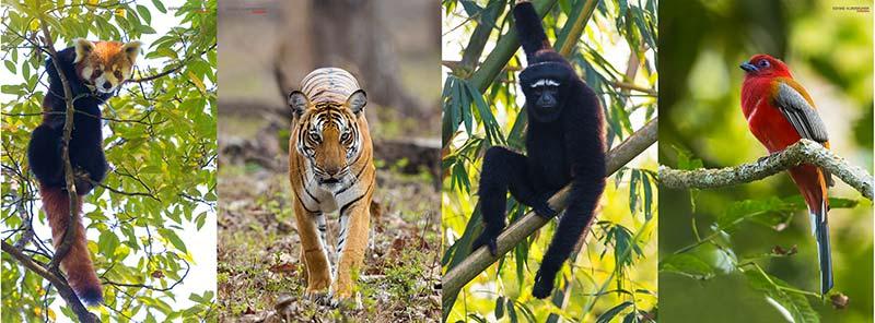 Photos by Govind Vijayakumar