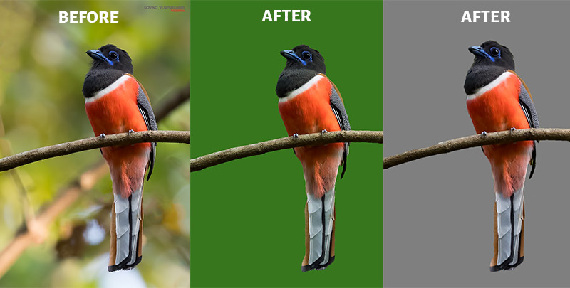 Photoworks Change Background Before After Image
