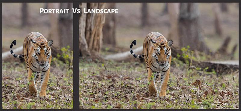 Portrait vs landscape orientation pictures