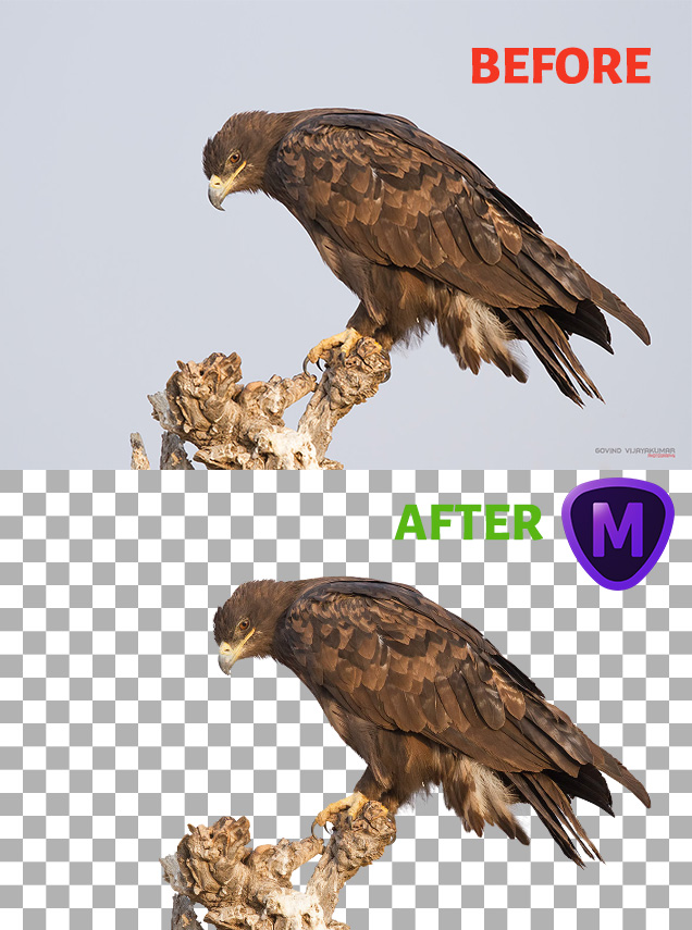Topaz Mask AI Before After Image