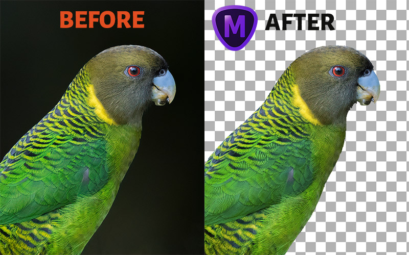Topaz Mask AI Before After Mask